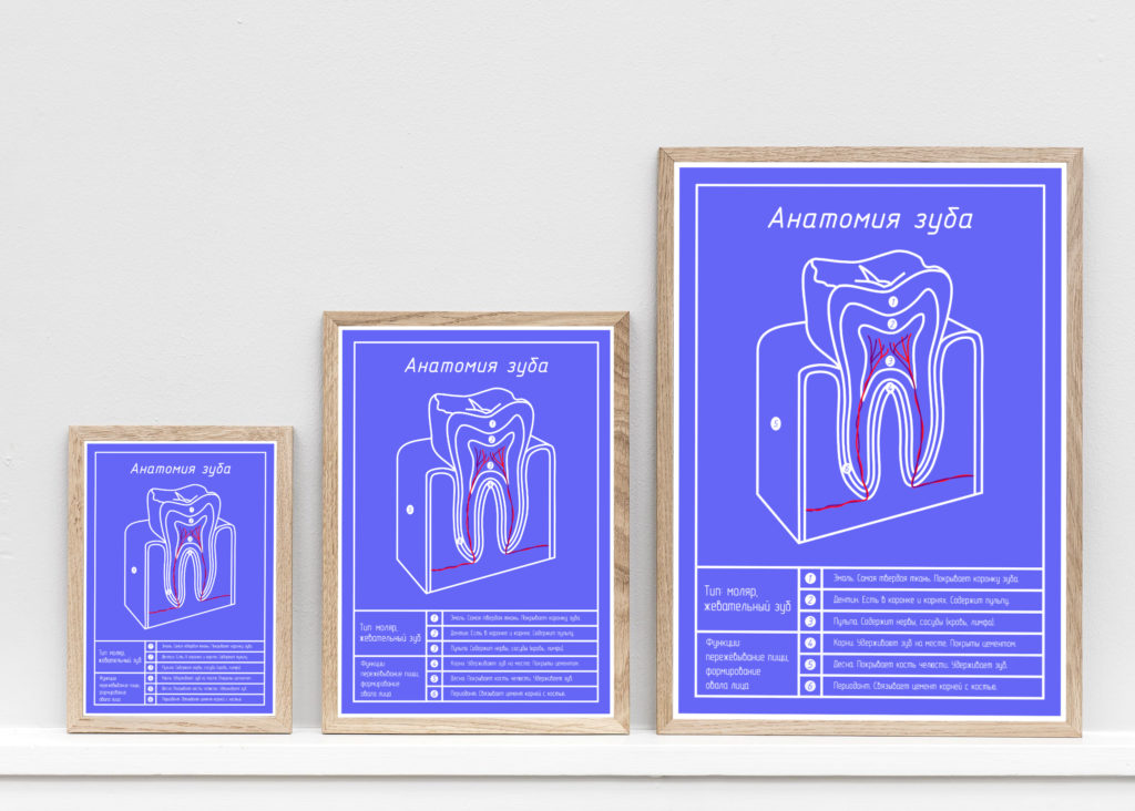 Анатомия зуба блюпринт в трех размерах